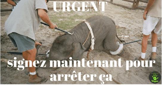 Stop aux cirques avec des animaux dans ma ville !