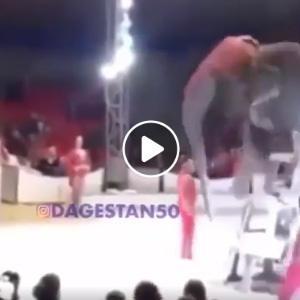 Un éléphant chute au cours d'un numéro de cirque