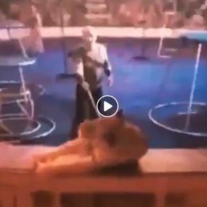Sous les yeux des spectateurs, un tigre convulse dans un cirque.