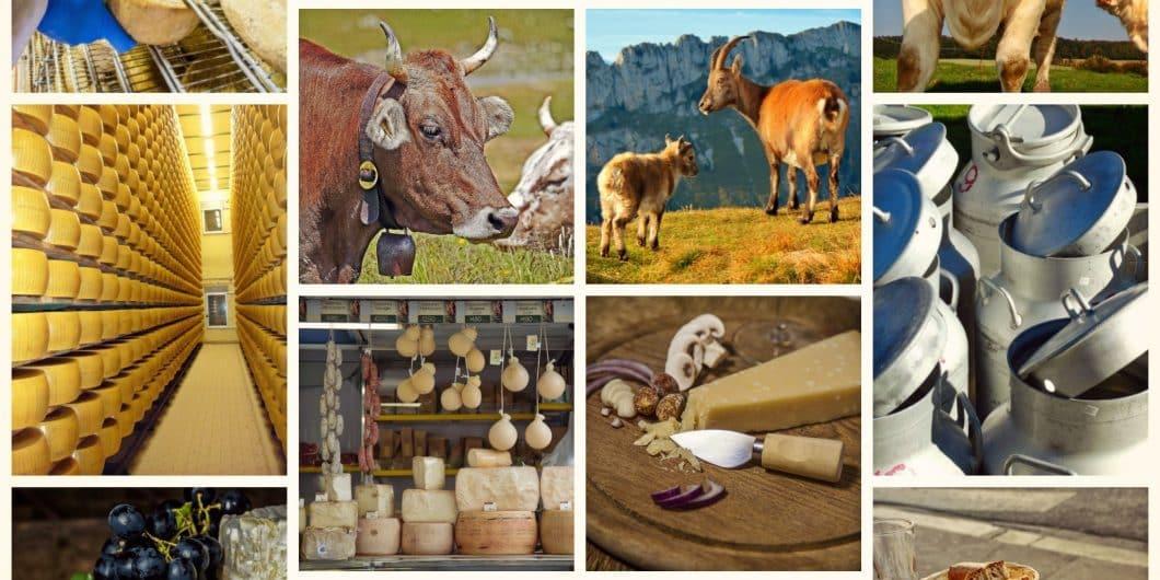 Les produits laitiers, nos ennemis pour la vie